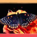Скачать бесплатно Цветную картинку №0009 для мобильного телефона из раздела Животные, насекомые, рыбы, формат jpg