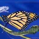 Скачать бесплатно Цветную картинку №0011 для мобильного телефона из раздела Животные, насекомые, рыбы, формат jpg