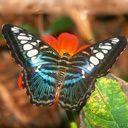 Скачать бесплатно Цветную картинку №0014 для мобильного телефона из раздела Животные, насекомые, рыбы, формат jpg