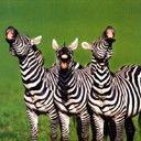 Скачать бесплатно Цветную картинку №0026 для мобильного телефона из раздела Животные, насекомые, рыбы, формат jpg