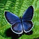 Скачать бесплатно Цветную картинку №0035 для мобильного телефона из раздела Животные, насекомые, рыбы, формат jpg