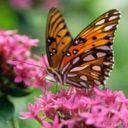 Скачать бесплатно Цветную картинку №0046 для мобильного телефона из раздела Животные, насекомые, рыбы, формат jpg