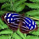 Скачать бесплатно Цветную картинку №0057 для мобильного телефона из раздела Животные, насекомые, рыбы, формат jpg