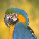 Скачать бесплатно Цветную картинку №0092 для мобильного телефона из раздела Животные, насекомые, рыбы, формат jpg