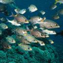 Скачать бесплатно Цветную картинку №0098 для мобильного телефона из раздела Животные, насекомые, рыбы, формат jpg