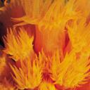 Скачать бесплатно Цветную картинку №0101 для мобильного телефона из раздела Животные, насекомые, рыбы, формат jpg