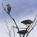 Скачать бесплатно Цветную картинку №0106 для мобильного телефона из раздела Животные, насекомые, рыбы, формат jpg