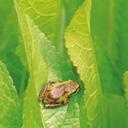 Скачать бесплатно Цветную картинку №0110 для мобильного телефона из раздела Животные, насекомые, рыбы, формат jpg