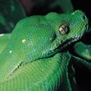 Скачать бесплатно Цветную картинку №0111 для мобильного телефона из раздела Животные, насекомые, рыбы, формат jpg