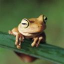 Скачать бесплатно Цветную картинку №0123 для мобильного телефона из раздела Животные, насекомые, рыбы, формат jpg