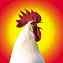 Скачать бесплатно Цветную картинку №0124 для мобильного телефона из раздела Животные, насекомые, рыбы, формат jpg