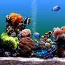 Скачать бесплатно Цветную картинку №0133 для мобильного телефона из раздела Животные, насекомые, рыбы, формат jpg