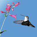 Скачать бесплатно Цветную картинку №0158 для мобильного телефона из раздела Животные, насекомые, рыбы, формат jpg