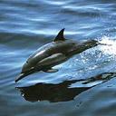 Скачать бесплатно Цветную картинку №0172 для мобильного телефона из раздела Животные, насекомые, рыбы, формат jpg