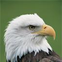 Скачать бесплатно Цветную картинку №0174 для мобильного телефона из раздела Животные, насекомые, рыбы, формат jpg