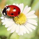 Скачать бесплатно Цветную картинку №0180 для мобильного телефона из раздела Животные, насекомые, рыбы, формат jpg