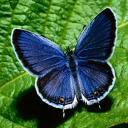 Скачать бесплатно Цветную картинку №0187 для мобильного телефона из раздела Животные, насекомые, рыбы, формат jpg