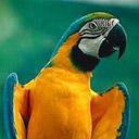 Скачать бесплатно Цветную картинку №0195 для мобильного телефона из раздела Животные, насекомые, рыбы, формат jpg