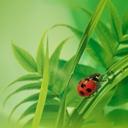Скачать бесплатно Цветную картинку №0208 для мобильного телефона из раздела Животные, насекомые, рыбы, формат jpg