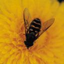 Скачать бесплатно Цветную картинку №0212 для мобильного телефона из раздела Животные, насекомые, рыбы, формат jpg