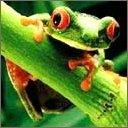 Скачать бесплатно Цветную картинку №0227 для мобильного телефона из раздела Животные, насекомые, рыбы, формат jpg