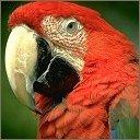 Скачать бесплатно Цветную картинку №0231 для мобильного телефона из раздела Животные, насекомые, рыбы, формат jpg