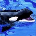 Скачать бесплатно Цветную картинку №0233 для мобильного телефона из раздела Животные, насекомые, рыбы, формат jpg