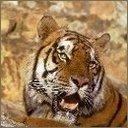 Скачать бесплатно Цветную картинку №0244 для мобильного телефона из раздела Животные, насекомые, рыбы, формат jpg