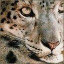 Скачать бесплатно Цветную картинку №0246 для мобильного телефона из раздела Животные, насекомые, рыбы, формат jpg