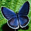 Скачать бесплатно Цветную картинку №0251 для мобильного телефона из раздела Животные, насекомые, рыбы, формат jpg