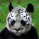 Скачать бесплатно Цветную картинку №0256 для мобильного телефона из раздела Животные, насекомые, рыбы, формат jpg
