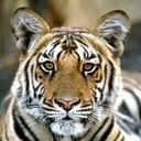 Скачать бесплатно Цветную картинку №0275 для мобильного телефона из раздела Животные, насекомые, рыбы, формат jpg