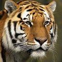 Скачать бесплатно Цветную картинку №0276 для мобильного телефона из раздела Животные, насекомые, рыбы, формат jpg