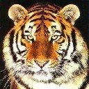 Скачать бесплатно Цветную картинку №0277 для мобильного телефона из раздела Животные, насекомые, рыбы, формат jpg