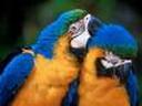Скачать бесплатно Цветную картинку №0291 для мобильного телефона из раздела Животные, насекомые, рыбы, формат jpg