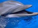 Скачать бесплатно Цветную картинку №0295 для мобильного телефона из раздела Животные, насекомые, рыбы, формат jpg