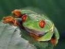 Скачать бесплатно Цветную картинку №0297 для мобильного телефона из раздела Животные, насекомые, рыбы, формат jpg