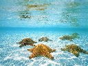 Скачать бесплатно Цветную картинку №0299 для мобильного телефона из раздела Животные, насекомые, рыбы, формат jpg