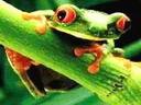 Скачать бесплатно Цветную картинку №0300 для мобильного телефона из раздела Животные, насекомые, рыбы, формат jpg
