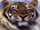 Скачать бесплатно Цветную картинку №0304 для мобильного телефона из раздела Животные, насекомые, рыбы, формат jpg