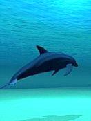 Скачать бесплатно Цветную картинку №0318 для мобильного телефона из раздела Животные, насекомые, рыбы, формат jpg