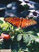 Скачать бесплатно Цветную картинку №0322 для мобильного телефона из раздела Животные, насекомые, рыбы, формат jpg