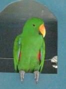 Скачать бесплатно Цветную картинку №0325 для мобильного телефона из раздела Животные, насекомые, рыбы, формат jpg