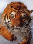 Скачать бесплатно Цветную картинку №0349 для мобильного телефона из раздела Животные, насекомые, рыбы, формат jpg