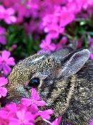 Скачать бесплатно Цветную картинку №0366 для мобильного телефона из раздела Животные, насекомые, рыбы, формат jpg
