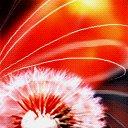 Скачать бесплатно Цветную картинку №0001 для мобильного телефона из раздела Растения, цветы, формат jpg