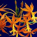 Скачать бесплатно Цветную картинку №0003 для мобильного телефона из раздела Растения, цветы, формат jpg