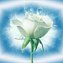 Скачать бесплатно Цветную картинку №0009 для мобильного телефона из раздела Растения, цветы, формат jpg