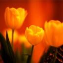 Скачать бесплатно Цветную картинку №0010 для мобильного телефона из раздела Растения, цветы, формат jpg