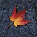 Скачать бесплатно Цветную картинку №0026 для мобильного телефона из раздела Растения, цветы, формат jpg